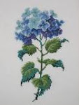 Hydrangea by Shelia Hudson