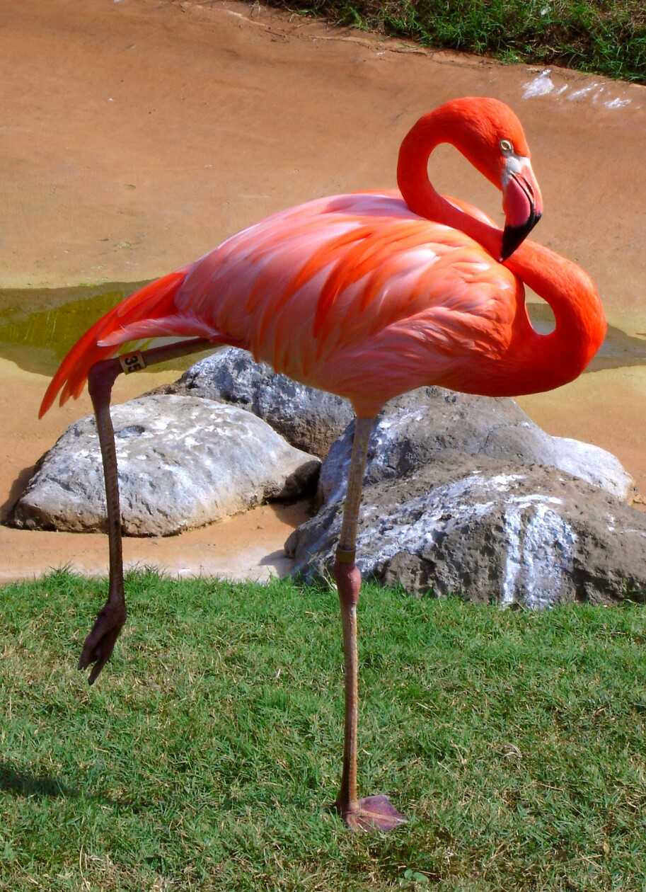 dancing with dragonflies  there u0026 39 s a pink flamingo on my