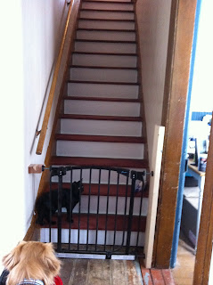 simple farm house stairs fixed and stained