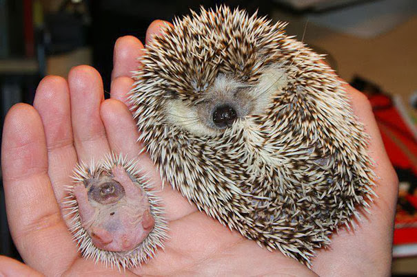 34 Animales con sus Adorables Mini Contrapartes