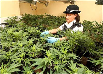 British cops growing marihuana? Yes they can!