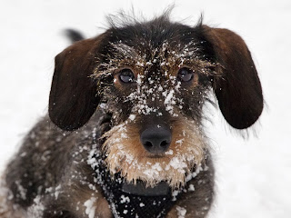 Ways to Keep Your Pet Happy in Winter