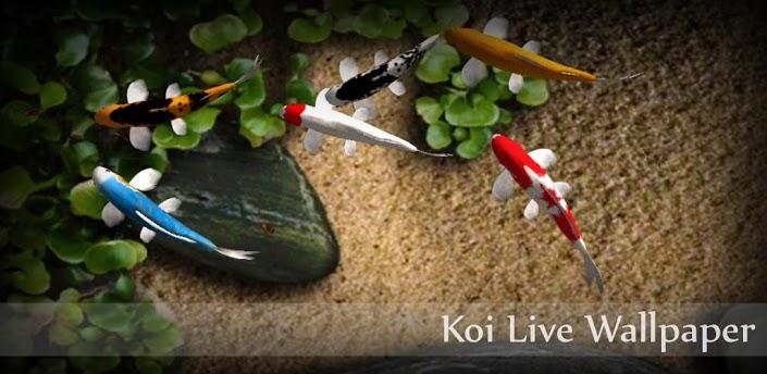 koi fish live wallpaper apk full version