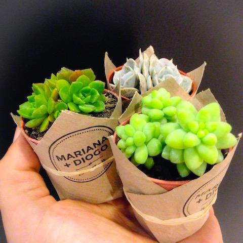 Green Gift personalizado