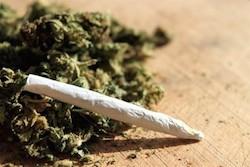 It is Impossible to Overdose on Marijuana