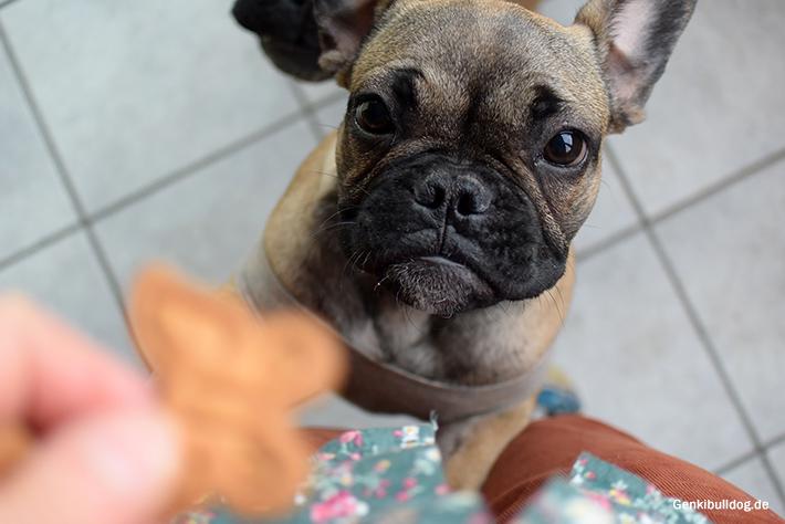 Vanille Kekse Rezept für Hunde