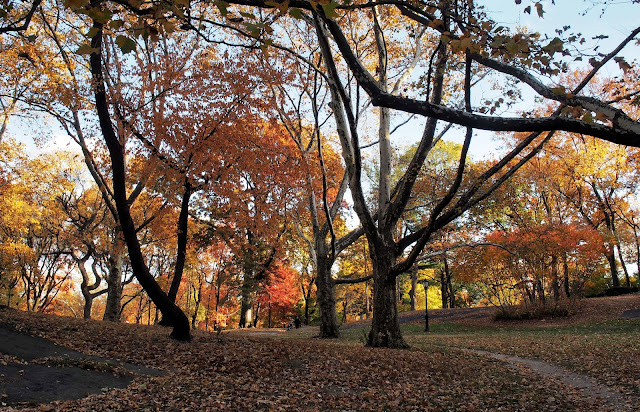 Fall Foliage in Central Park, #fallfoliage, #fallcolors, Central Park, NYC