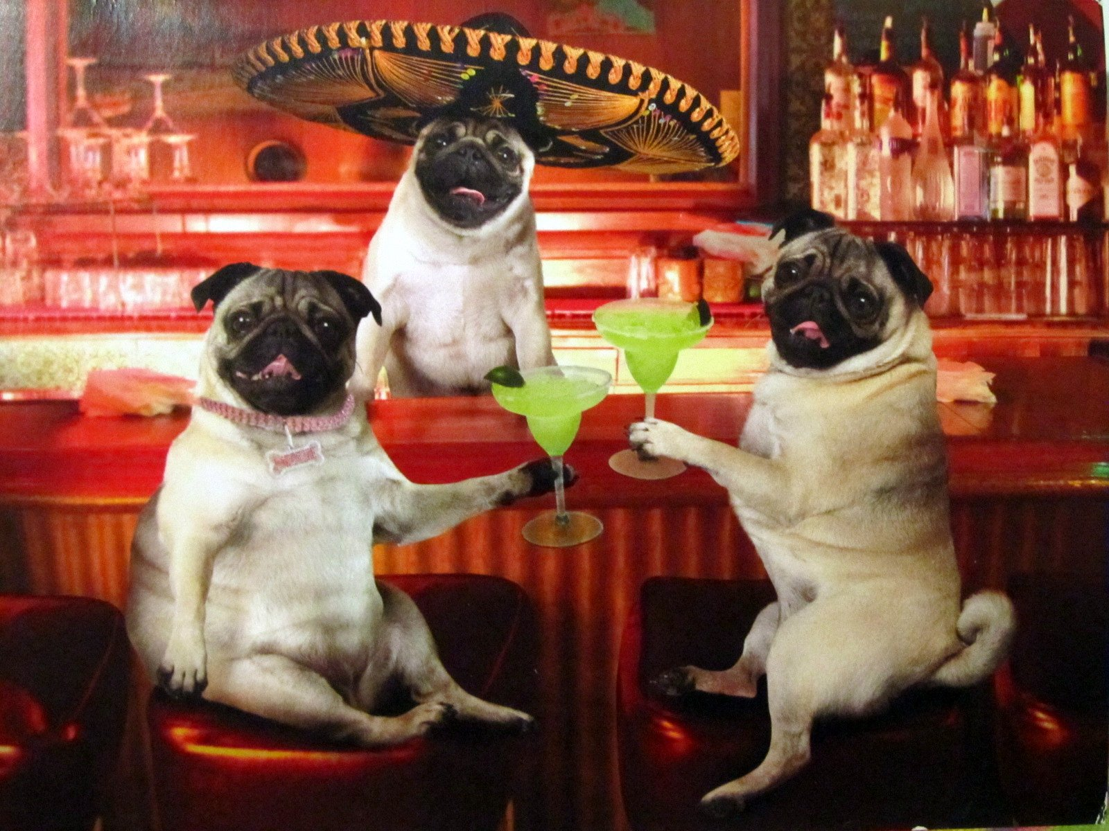 pug party