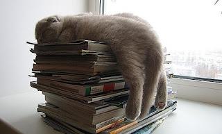 Gatos divertidos para imprimir