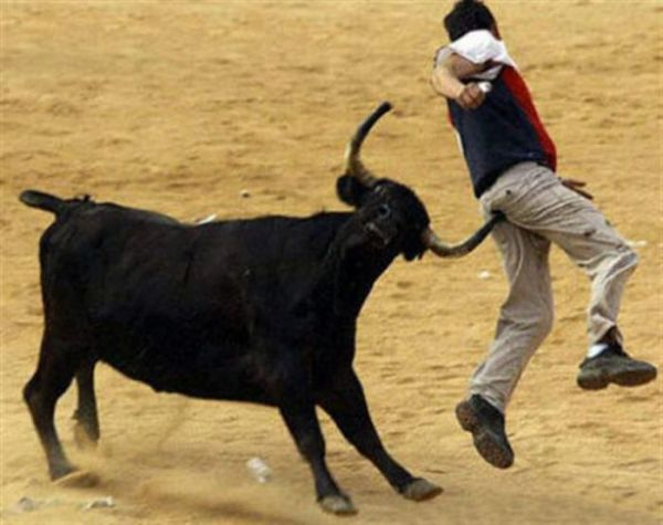 bull ouch