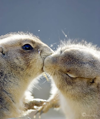 Animals kissing photos