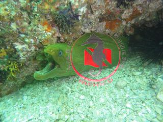 Puerto Vallarta diving certifications
