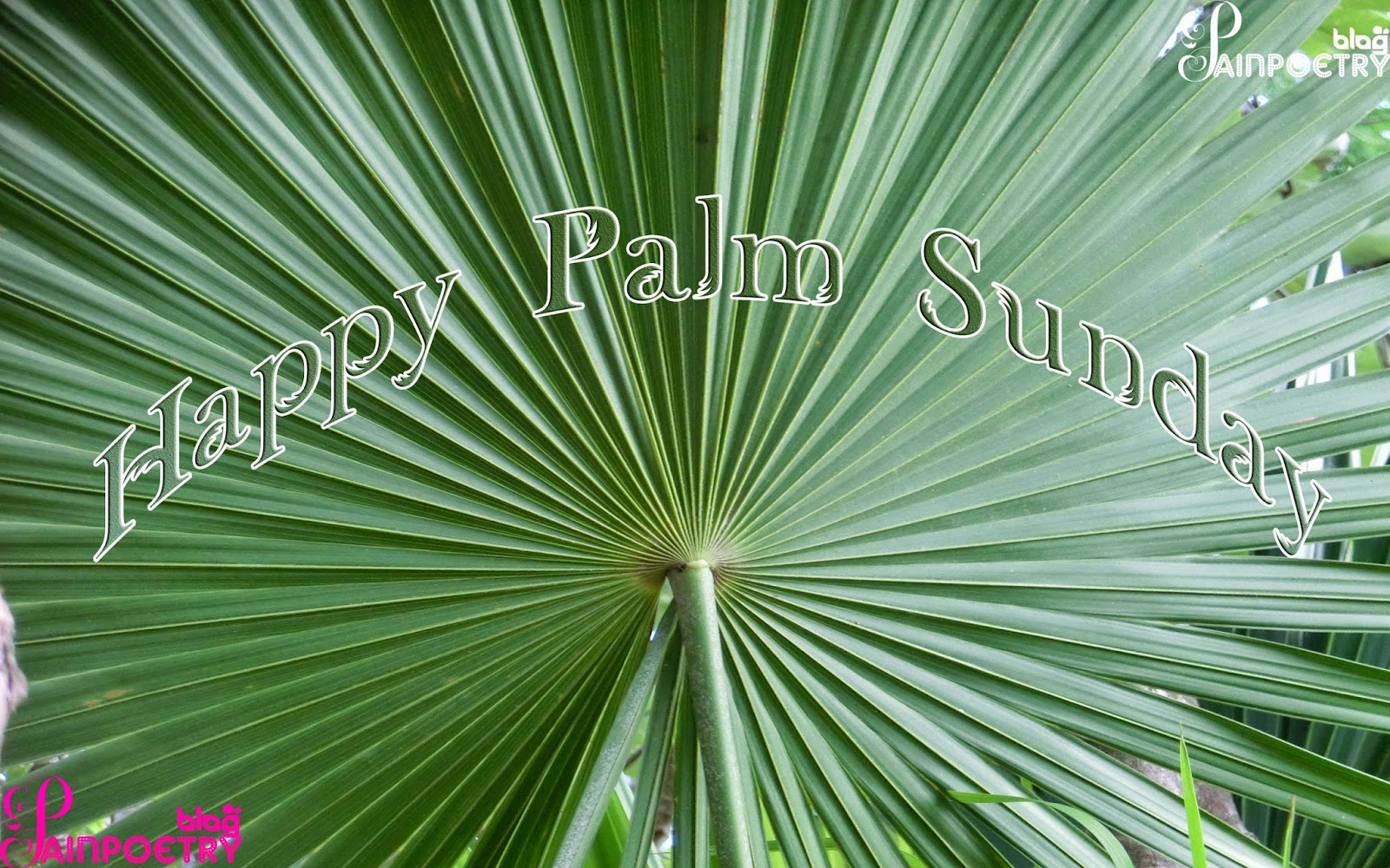 Palm-Sunday-Palm-Image-Wishes-Wallpaper-HD