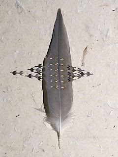 Feather Art by Chris Maynard Seen On www.coolpicturegallery.us