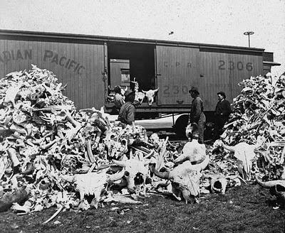 os, bison, wagon, Canadien Pacifique, chemin de fer, bibliothèque et Archives Canada
