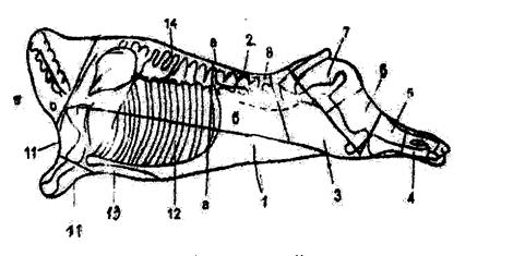 трудовой договор с рубщиком мяса образец