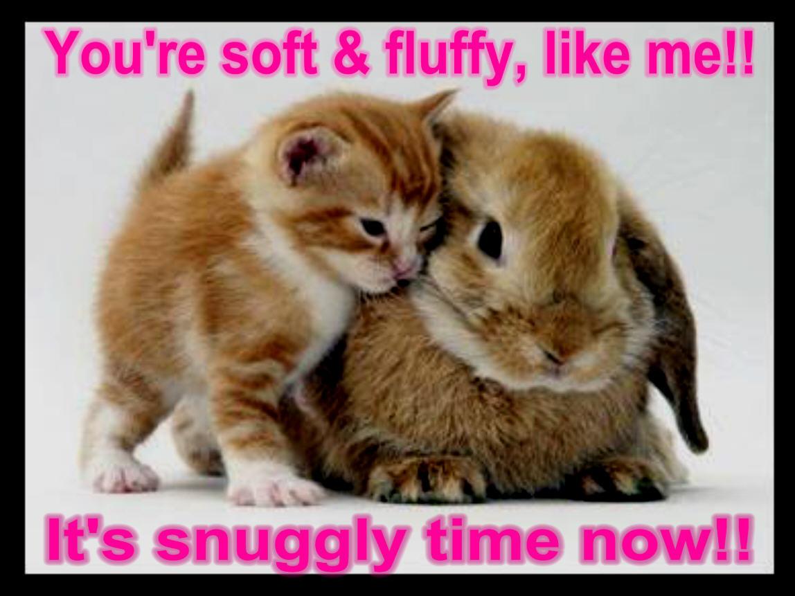 http://2.bp.blogspot.com/-mlUtbDrYew0/TviKUnOOs8I/AAAAAAAARII/2yeEKzIGp8Y/s1600/cat-bunny-funny-animal-humor-19948808-1148-861.jpg