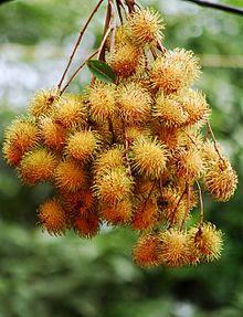 قائمة الفواكه 220px-Rambutans