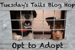 http://dogsnpawz.com/tuesdays-tails-adopt-this-shorthaired-pointerlab-mix/