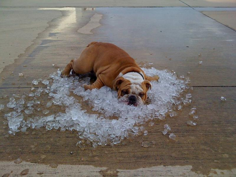 Dog Panting A Lot In Hot Weather