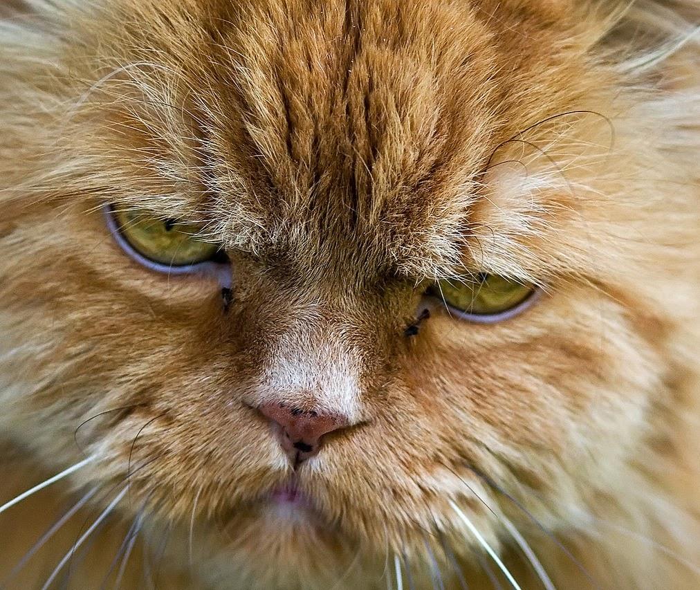 Grumpy Cat Kitten Video