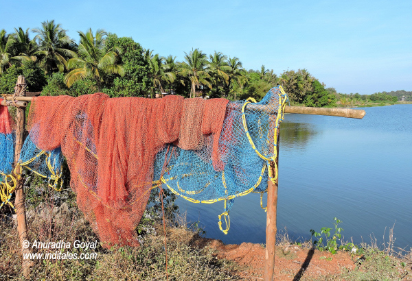 Fishing Net at Moira Backwaters, Goa