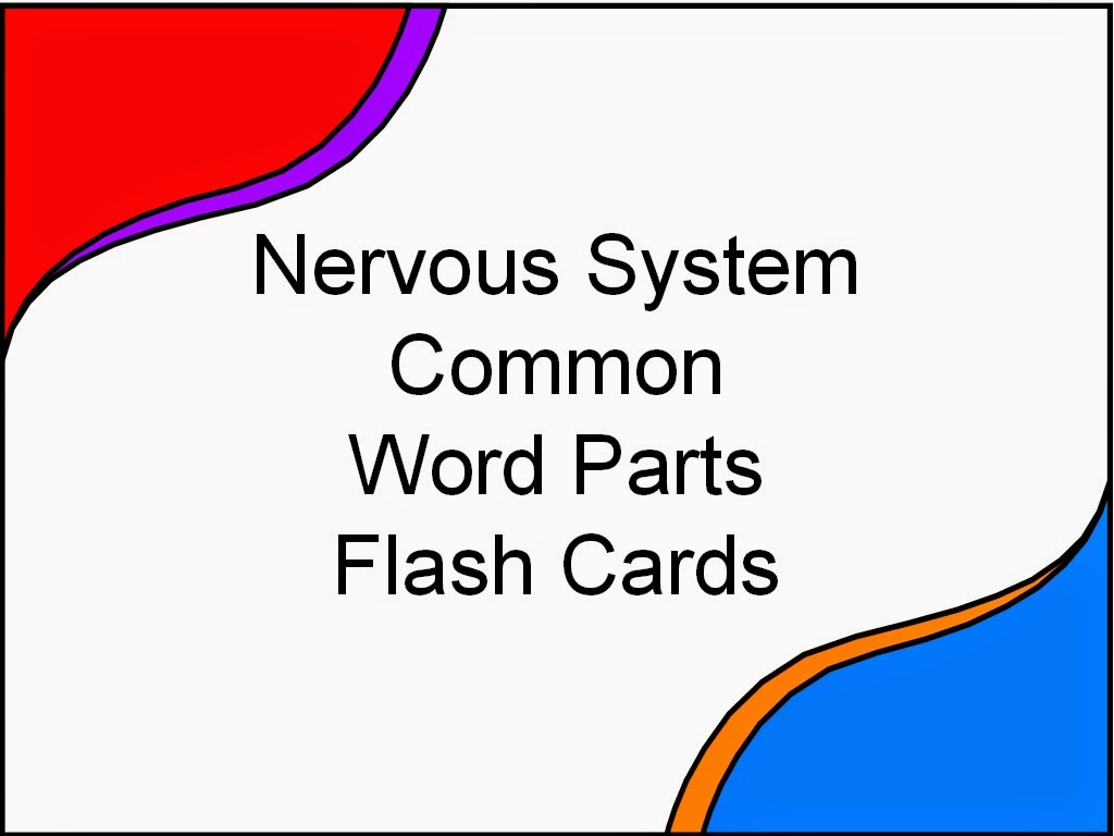 nervous system flash cards The following are free mcat flashcards and free mcat notes that cover all 4   nervous system flashcards respiratory system flashcards.