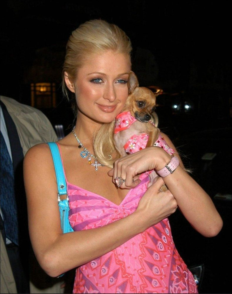 and that these Chihuahuas