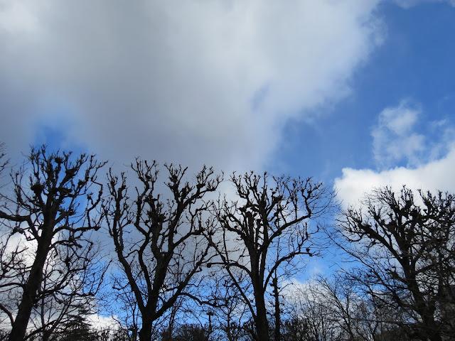 Paris trees square