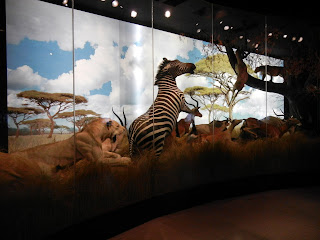Display at the Houston Museum of Natural Science