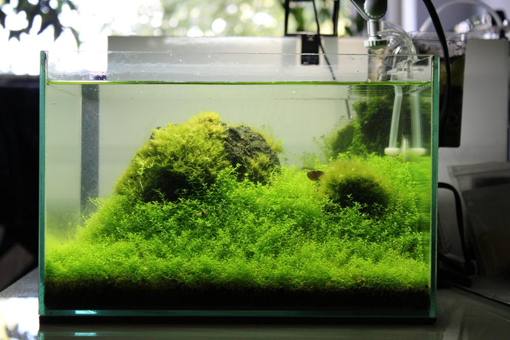 Ultimative Pflanztipps Die Jeder Kennen Sollte Fur S Aquarium