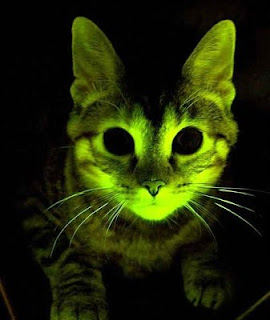 gatos que brillan