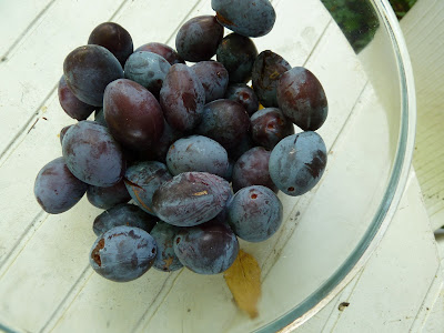 Bowl of home grown plums