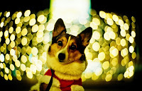 55 Exceptional Examples of Bokeh Photography