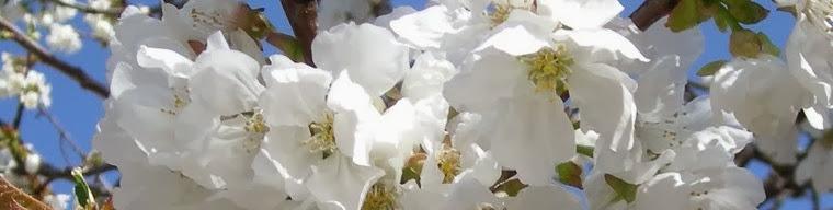 Oman Plants