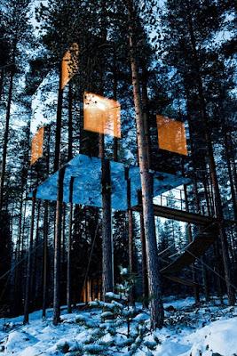 rumah pohon cermin kotak