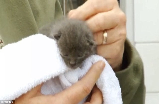 Rescatan a gato de dentro de estatua