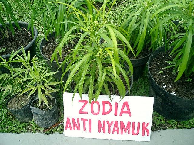 Revolusi Ilmiah - Tanaman zodia untuk anti nyamuk