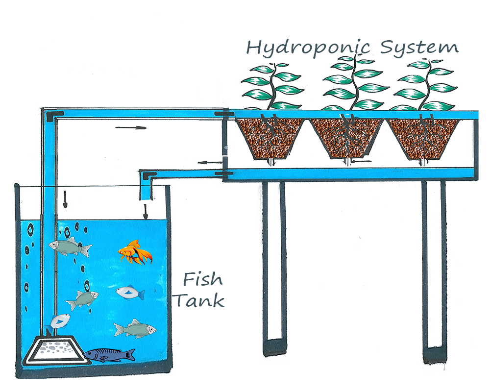 Hydroponic passion aquaponics for Hydroponic system with fish