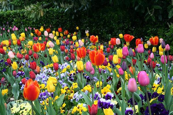 Que significa soñar con flores de colores