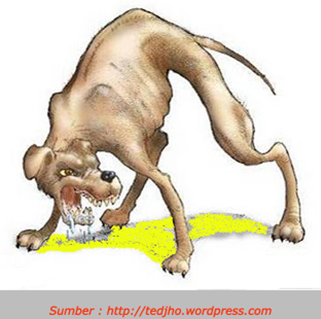 Human with rabies symptoms