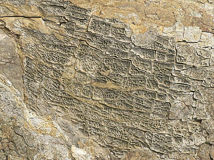 Un fond marin fossilisé dans une falaise à Tromel