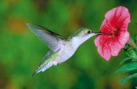 Resultado de imagem para flor da saudade