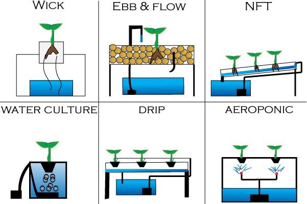 Bercocok Tanam Di Lahan Sempit Dengan Sistem Hidroponik Sederhana