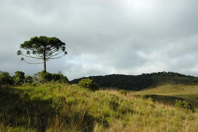 Parque Nacional de Aparados da Serra, em Cambará do Sul