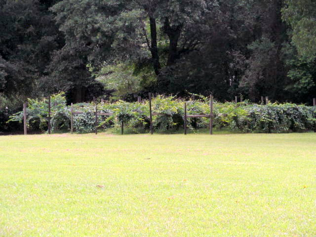 cheraw mature personals Search cheraw sc land for sale find ranches, lots, acreage, and more on land and farm page 1 of 3.