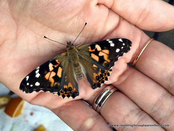 Domesticated butterflies