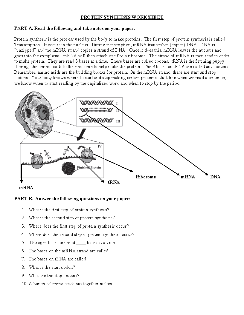 Uncategorized Protein Synthesis Worksheet week 29 tuesday april 14 2015 miss durants science class test protein synthesis worksheet front and back try we will go over it in class