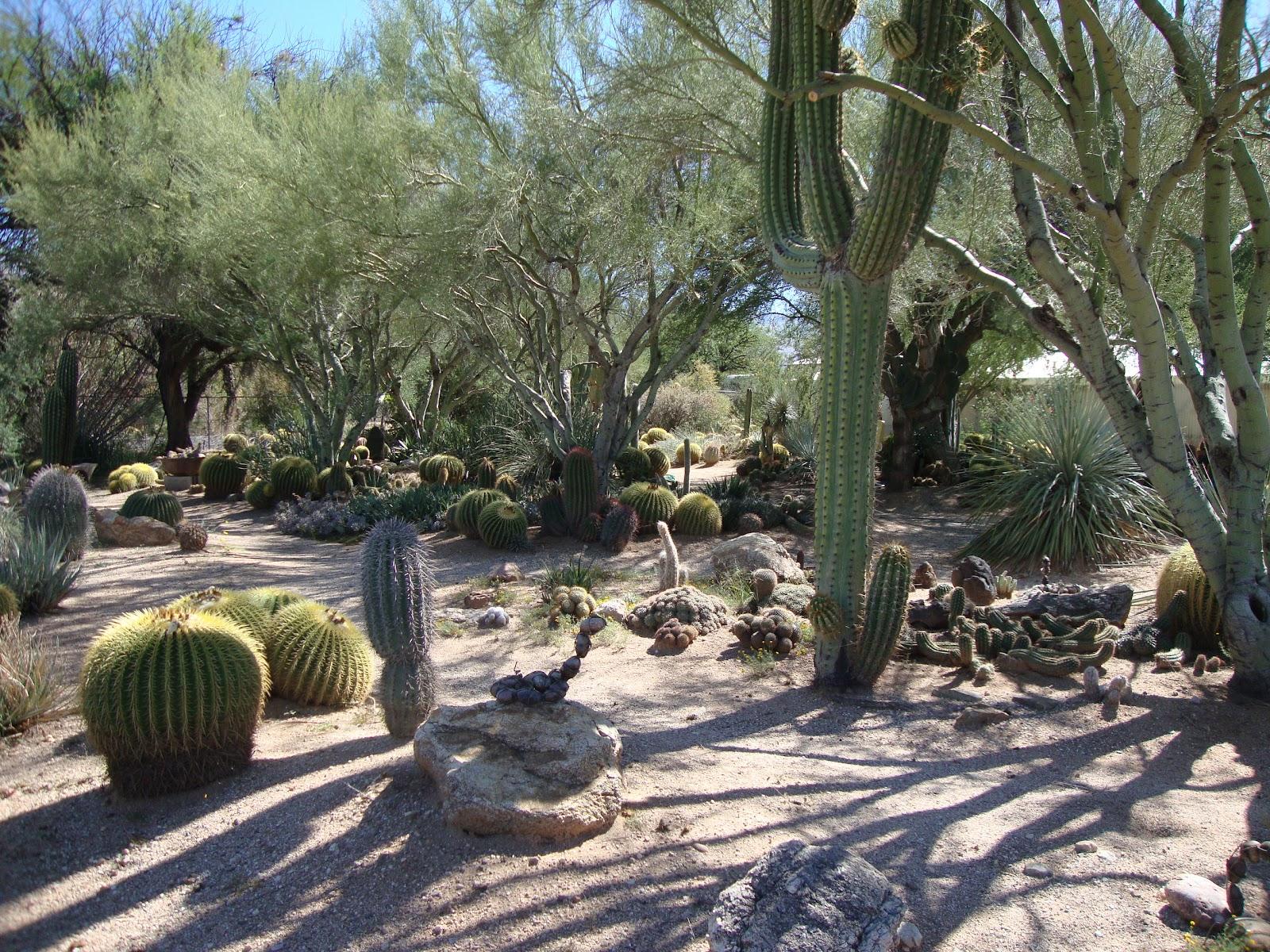 Danger Garden BampB Cactus Farm Tucson