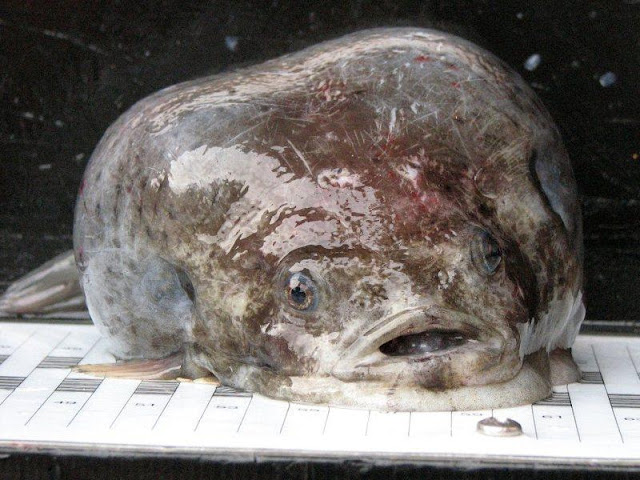 8 Ugliest Animals in the world